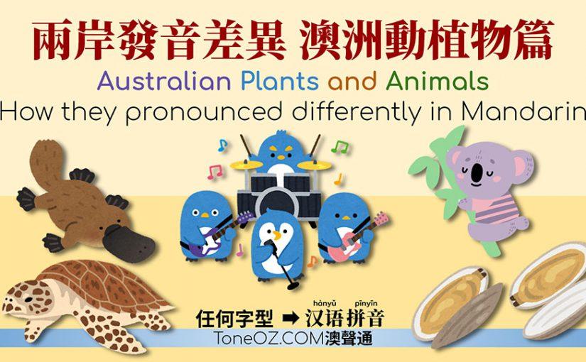 兩岸發音差異 澳洲動植物篇 — 企鵝,鴨獭,玳瑁…